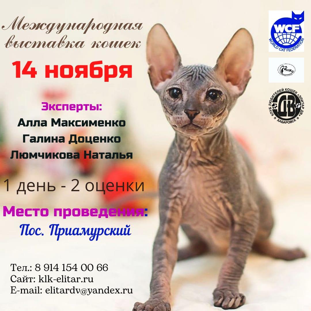 Выставка кошек 14.10.2021г.